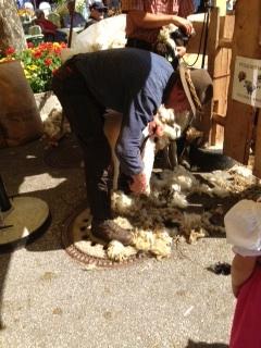 Schafschere